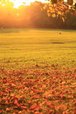Automne d'or Image stock