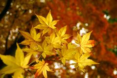 Automne d'or photo stock