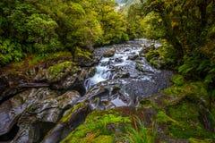 Automne d'abîme, parc national de Fiordland, Milford Sound, Nouvelle-Zélande photo libre de droits