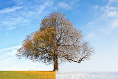 Automne d'arbre de collage contre l'hiver Photographie stock