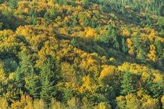 Automne d'automne de forêt de fond photographie stock libre de droits