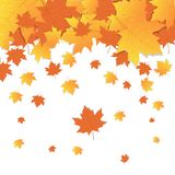 Automne d'Autumn Background Yellow Maple Leaves illustration stock
