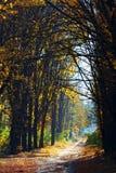 Automne d'or dans la forêt Photo stock