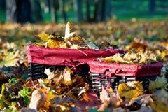 Automne d'or dans le panier en osier Tas des feuilles jaunes d'érable Photo libre de droits