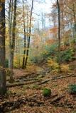 Automne d'or dans les bois Image libre de droits