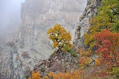 Automne d'or de paysage de montagne Images stock