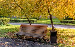 Automne d'or en parc avec un banc Photo stock