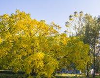 Automne d'or en parc de ville Images libres de droits