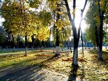 Automne d'or en parc de ville image libre de droits