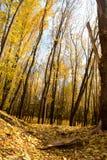 Automne d'or ! Marche par la forêt ! image stock