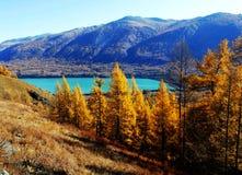Automne dans des kanas de lac Image stock