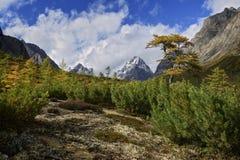 Automne dans l'arête de Kodar de montagnes Images stock