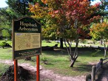 Automne dans l'arborétum de Hogsback, Afrique du Sud Image libre de droits