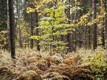 Automne dans la forêt Photos libres de droits