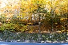 Automne dans la forêt photos stock