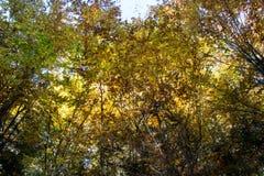 Automne dans la forêt photo stock