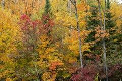 Automne dans la forêt. Image stock