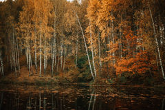 Automne dans la forêt Photographie stock