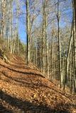 Automne dans la forêt Image libre de droits