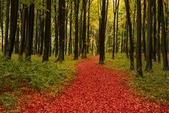 Automne dans la forêt colorée Images libres de droits