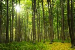 Automne dans la forêt colorée Photo stock