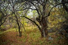 Automne dans la forêt de montagne photos libres de droits