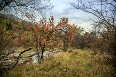 Automne dans la forêt de montagne photo libre de droits