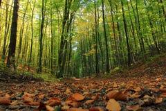 Automne dans la forêt, feuilles tombées poland images stock