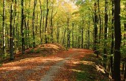 Automne dans la route de gravier de forêt image libre de droits