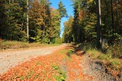 Automne dans la route de gravier de forêt poland images stock