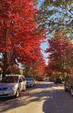Automne dans la rue canadienne image stock