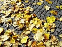 automne dans la ville image libre de droits