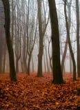 Automne dans le bois Image libre de droits