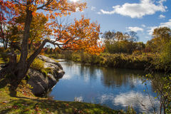 Automne dans le Canada provincial d'Ontario de parc de Killarney Photos stock