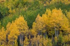Automne dans le Colorado Photo libre de droits