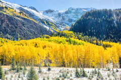 Automne dans le Colorado Images libres de droits
