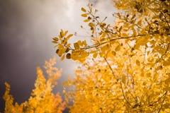 Automne dans le Colorado Photographie stock libre de droits