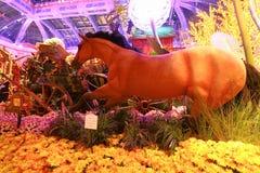 Automne dans le conservatoire d'hôtel de Bellagio et les jardins botaniques Images libres de droits