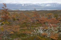 Automne dans le Patagonia, Chili Image libre de droits