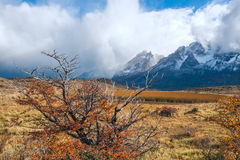 Automne dans le Patagonia Parc national Chili de Torres del Paine Photographie stock libre de droits