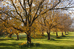 Automne dans le verger Photo stock