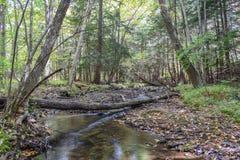 Automne dans les montagnes d'Allegheny Image stock