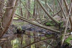 Automne dans les montagnes d'Allegheny Images stock