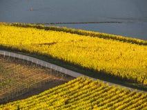 Automne dans les vignobles à la rivière le Rhin près du desheim de ¼ de RÃ Photographie stock