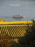 Automne dans les vignobles à la rivière le Rhin près du desheim de ¼ de RÃ Image stock