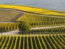 Automne dans les vignobles à la rivière le Rhin près du desheim de ¼ de RÃ Photographie stock libre de droits