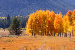 Automne dans Yellowstone Photo stock
