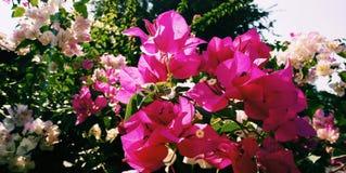Automne de ‹d'in†de ‹de s†de ‹de Flower†images libres de droits