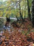 Automne de belle vue dans la forêt Photo libre de droits