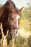 Automne de cheval Photo stock
